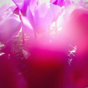 Vintage Bloom 01