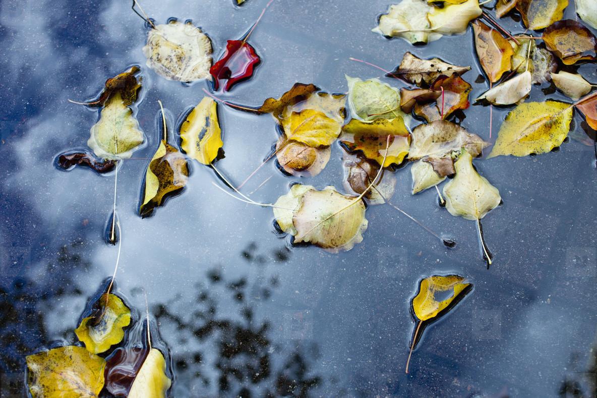 Vintage Bloom  02