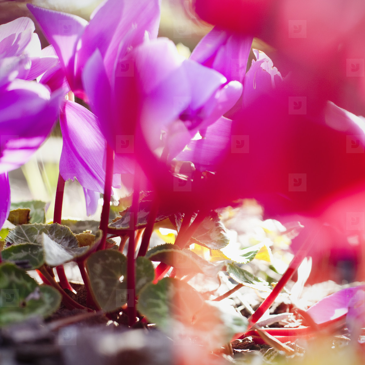 Vintage Bloom  09