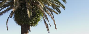 Beach Daze  09
