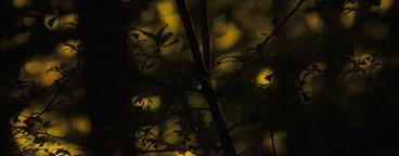 Light Over Shadow  08