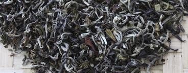 Tea Plantation Tour  07