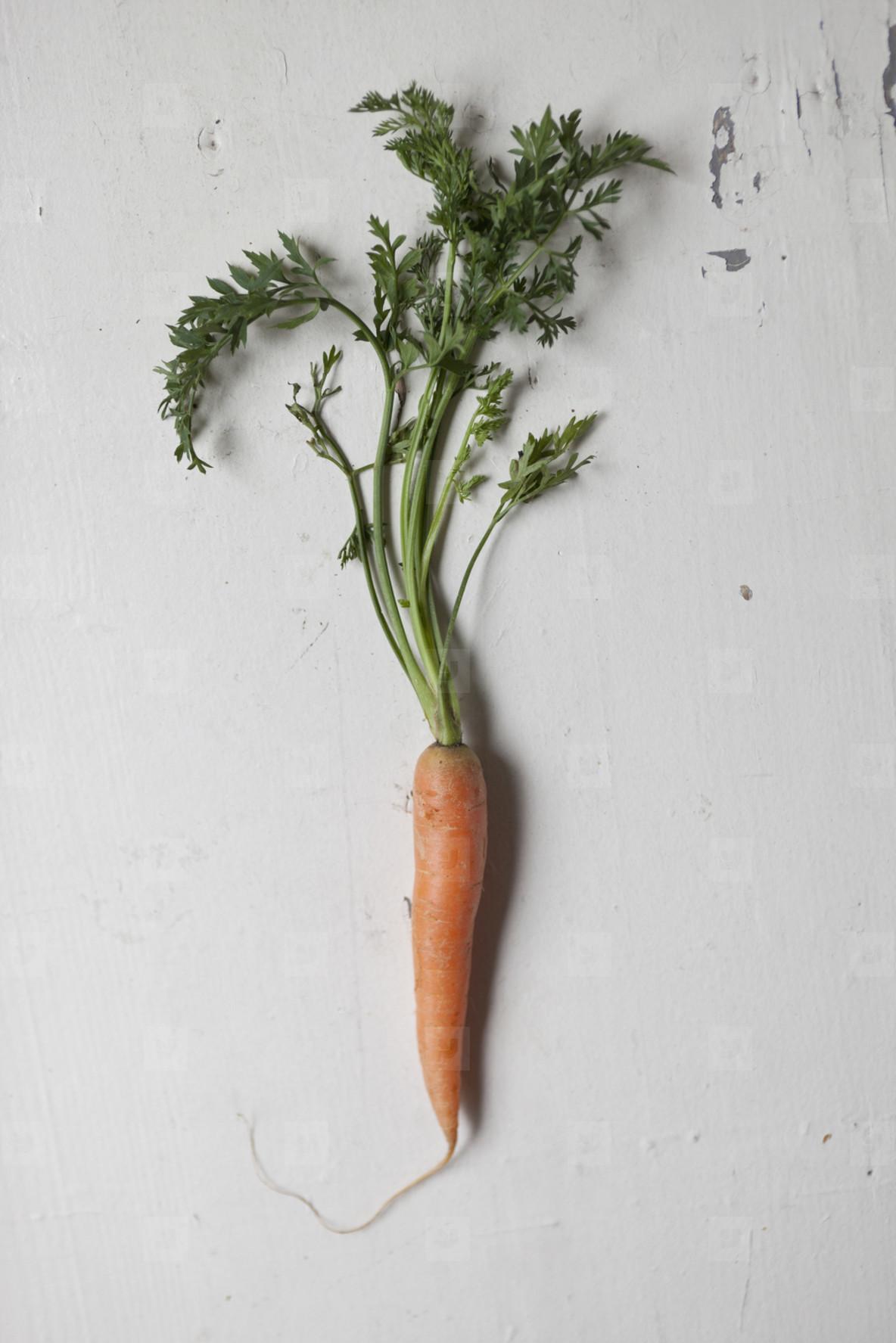 Fresh Food Rustic Remix  42