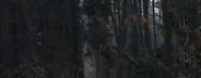 If A Tree Falls  07