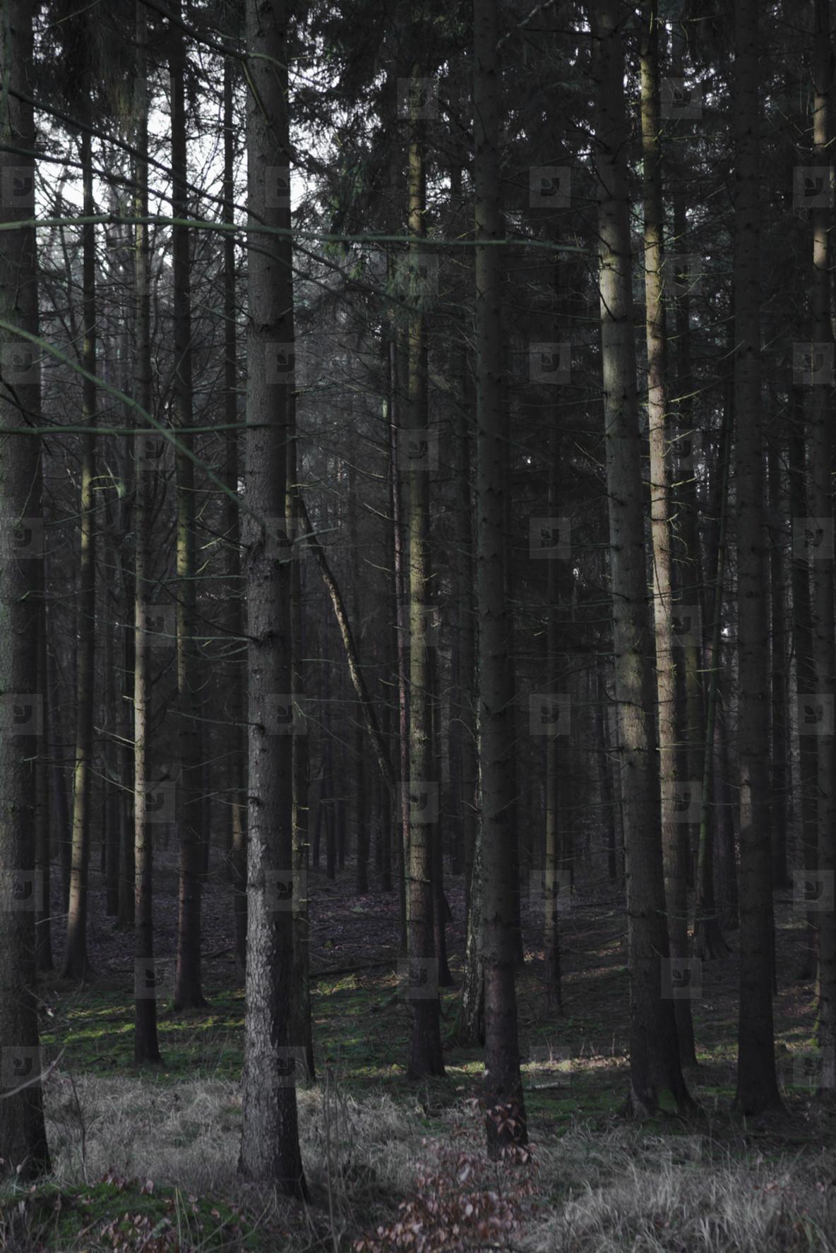 If A Tree Falls  12