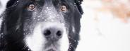 Dog Days  17