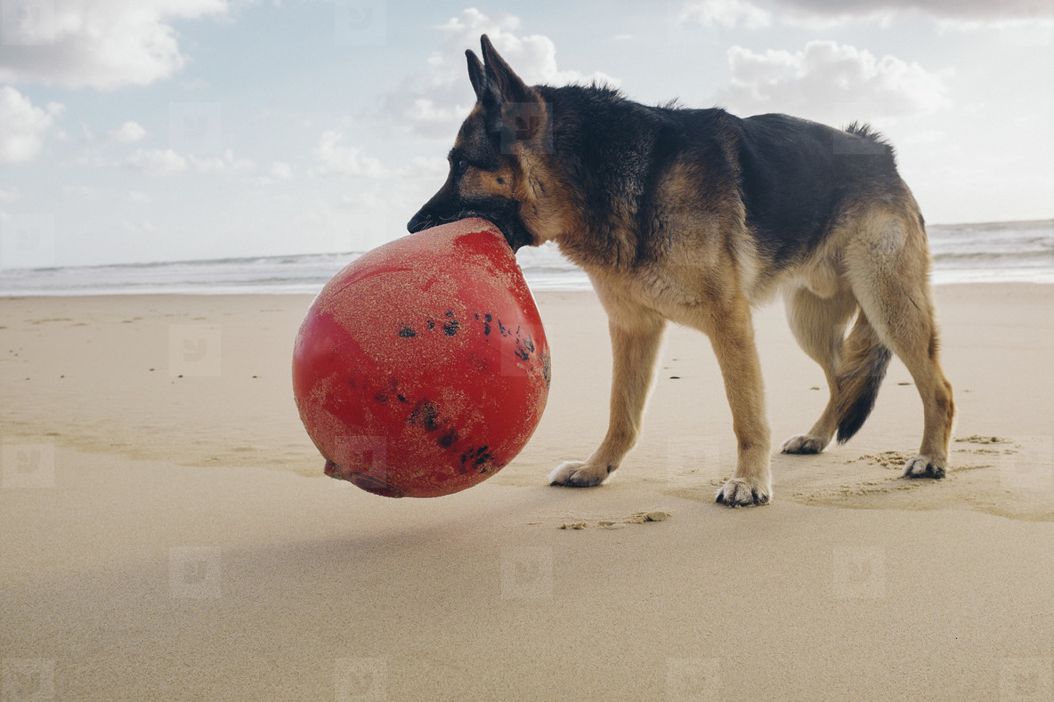 Dog Days  21