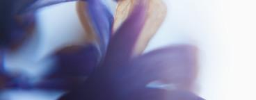 Flower Dreams  01