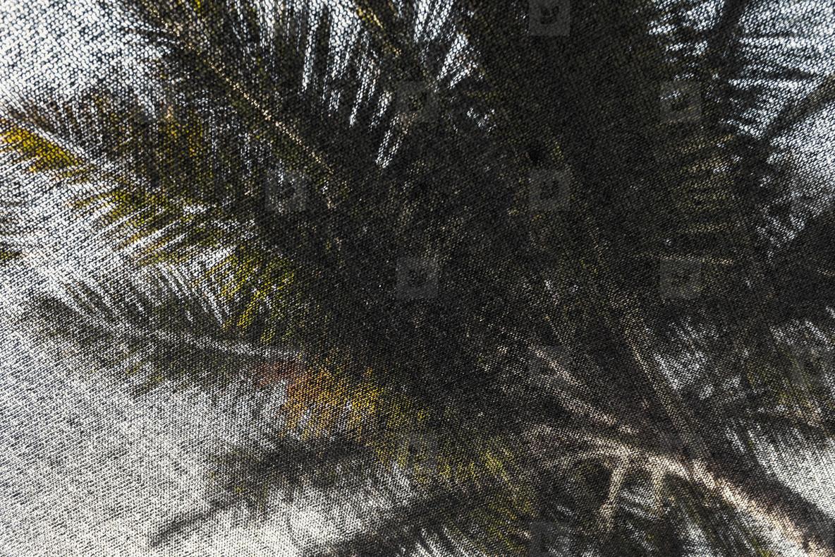 Palm Tree Life  01