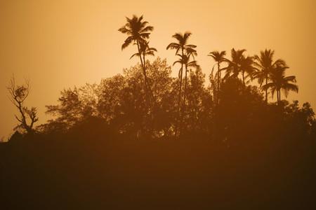 Palm Tree Life 06