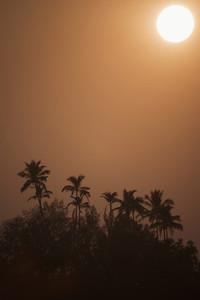 Palm Tree Life  10