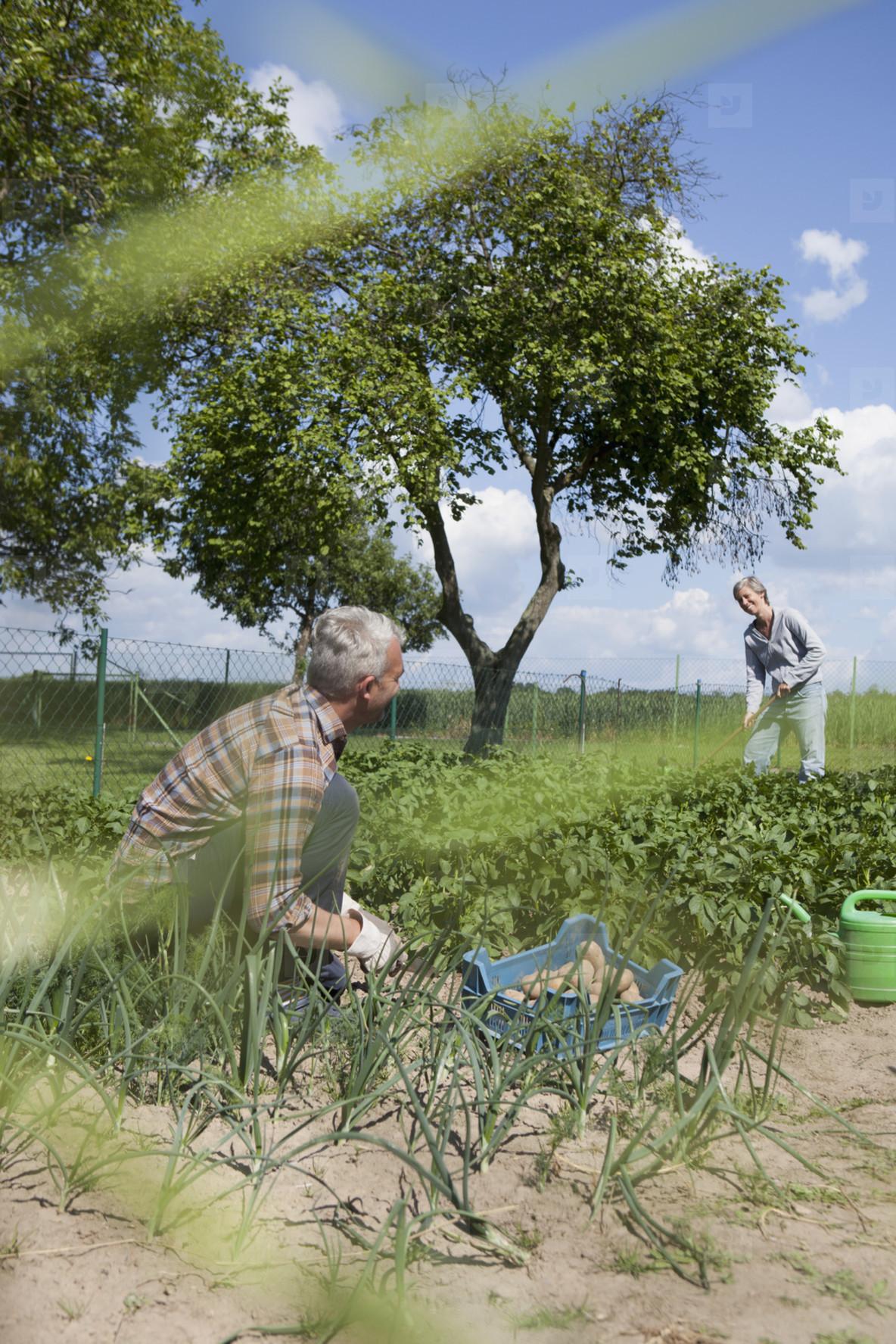 Summer Harvest  02