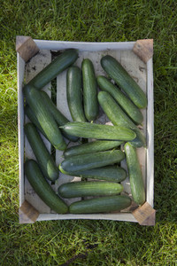Summer Harvest 06