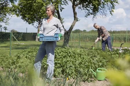 Summer Harvest 07