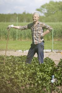 Summer Harvest  10