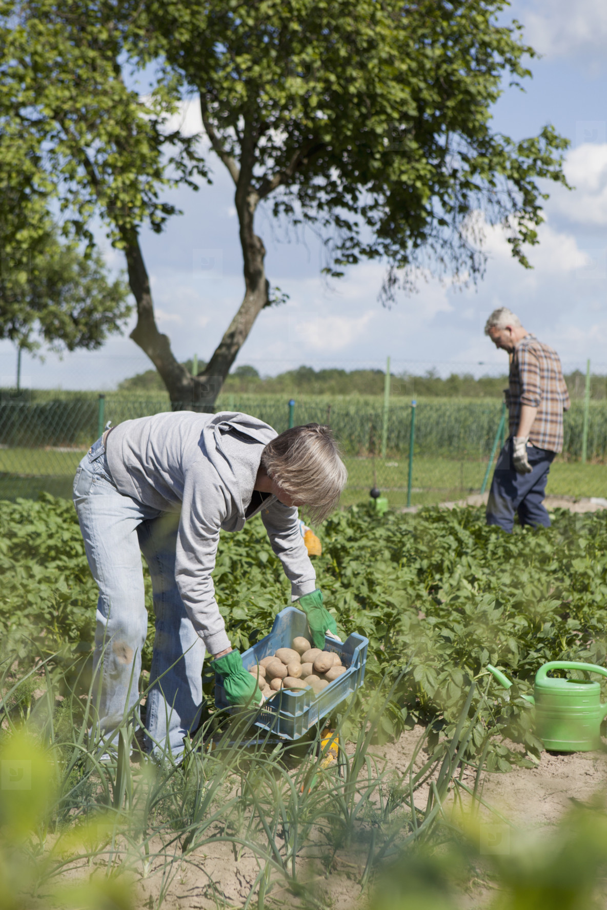 Summer Harvest  36