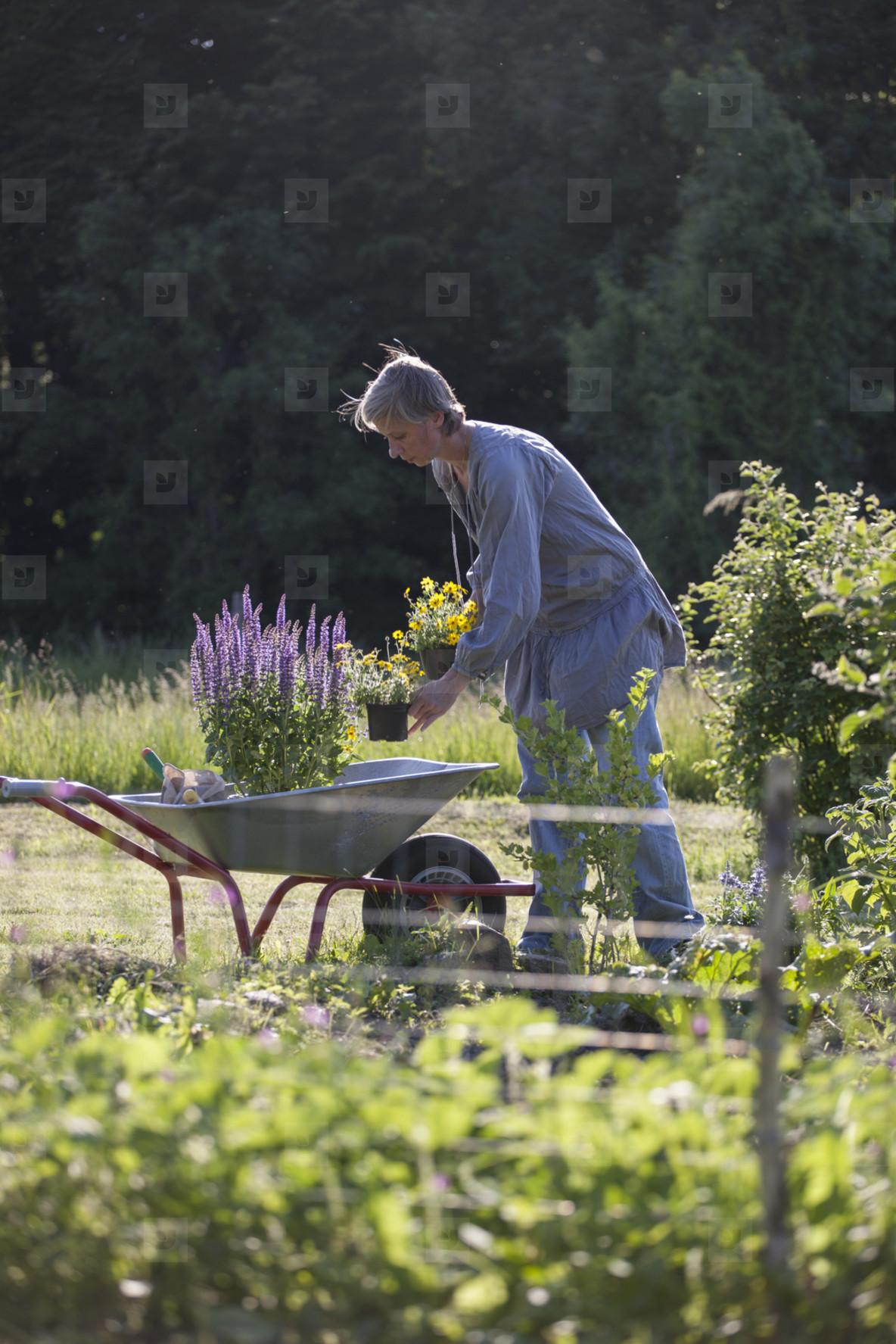 Summer Harvest  37