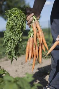 Summer Harvest 38