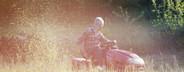 Summer Harvest  39