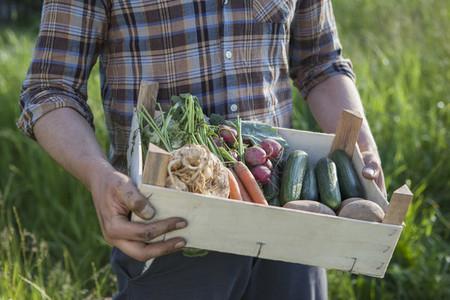 Summer Harvest 41