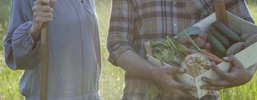 Summer Harvest  43