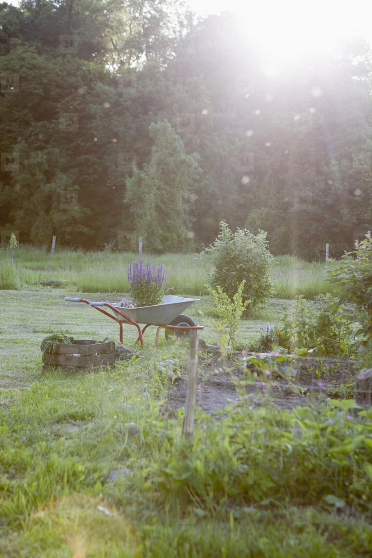 Summer Harvest  44