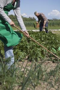 Summer Harvest 47