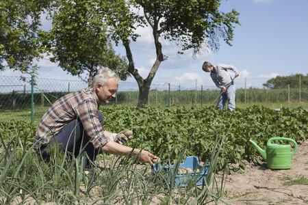 Summer Harvest  53