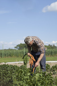 Summer Harvest  65