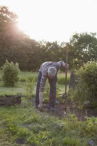 Summer Harvest 70
