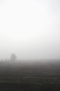 Field of Summer  02