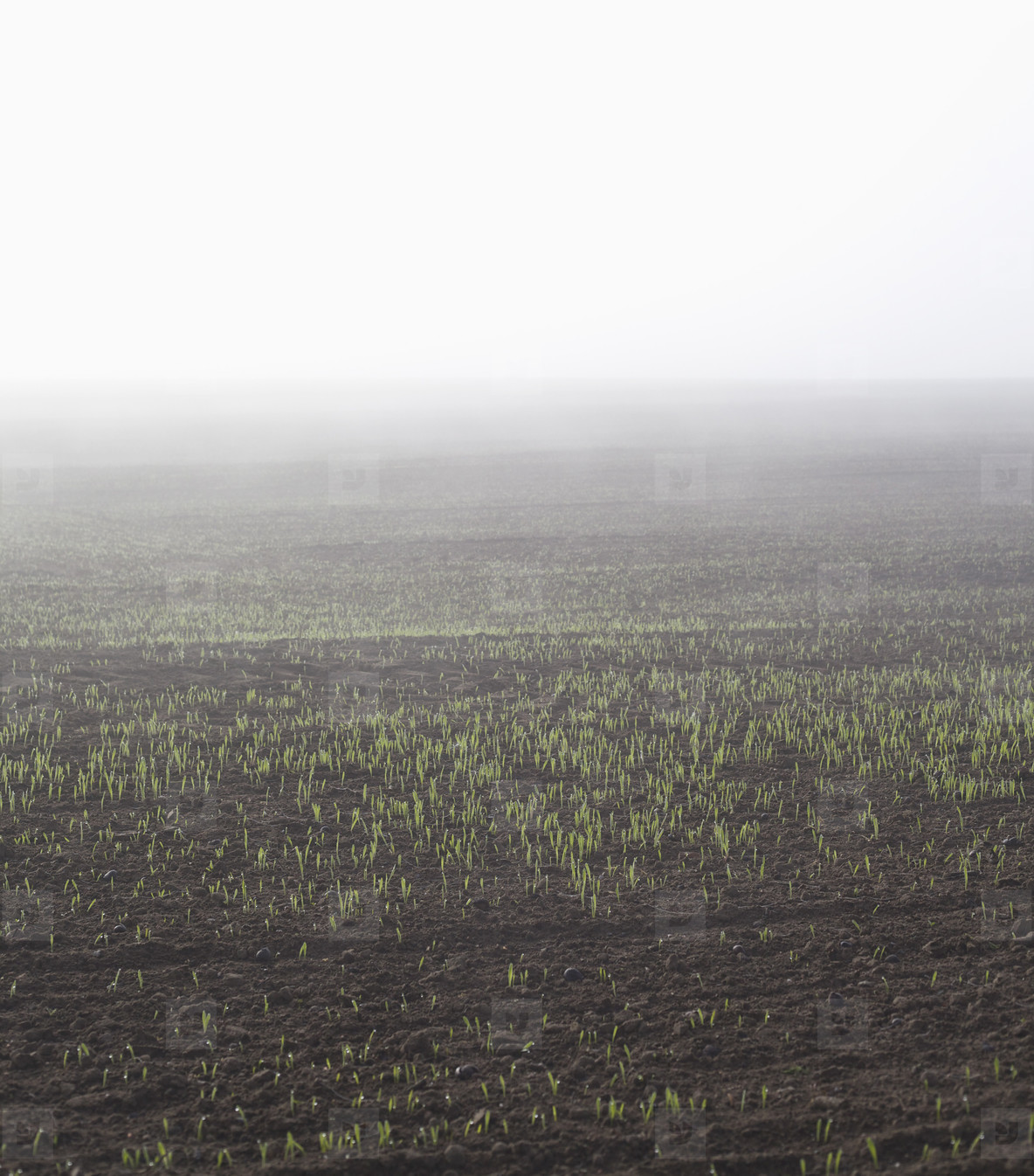 Field of Summer  05