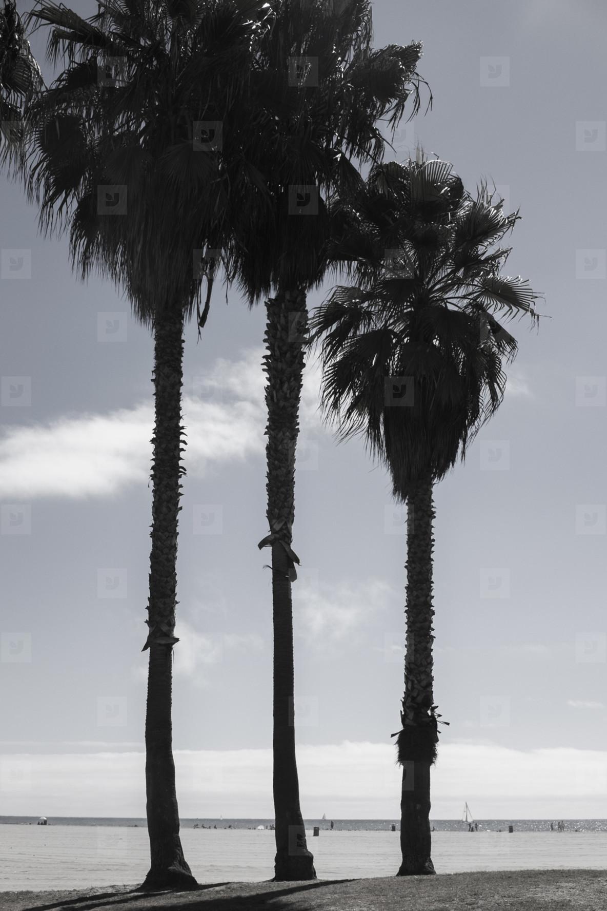 Back to Cali  18