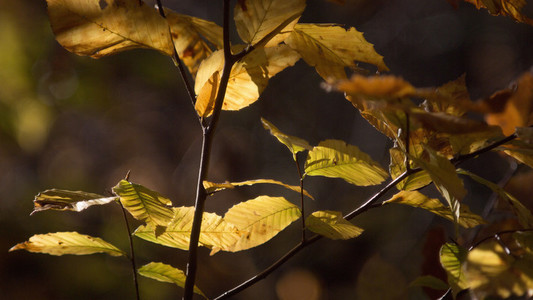 Leaf Her 01