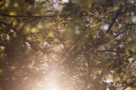 Leaf Her 05