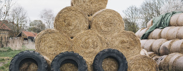 Hay There  09