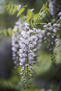 Dreamy Garden 01