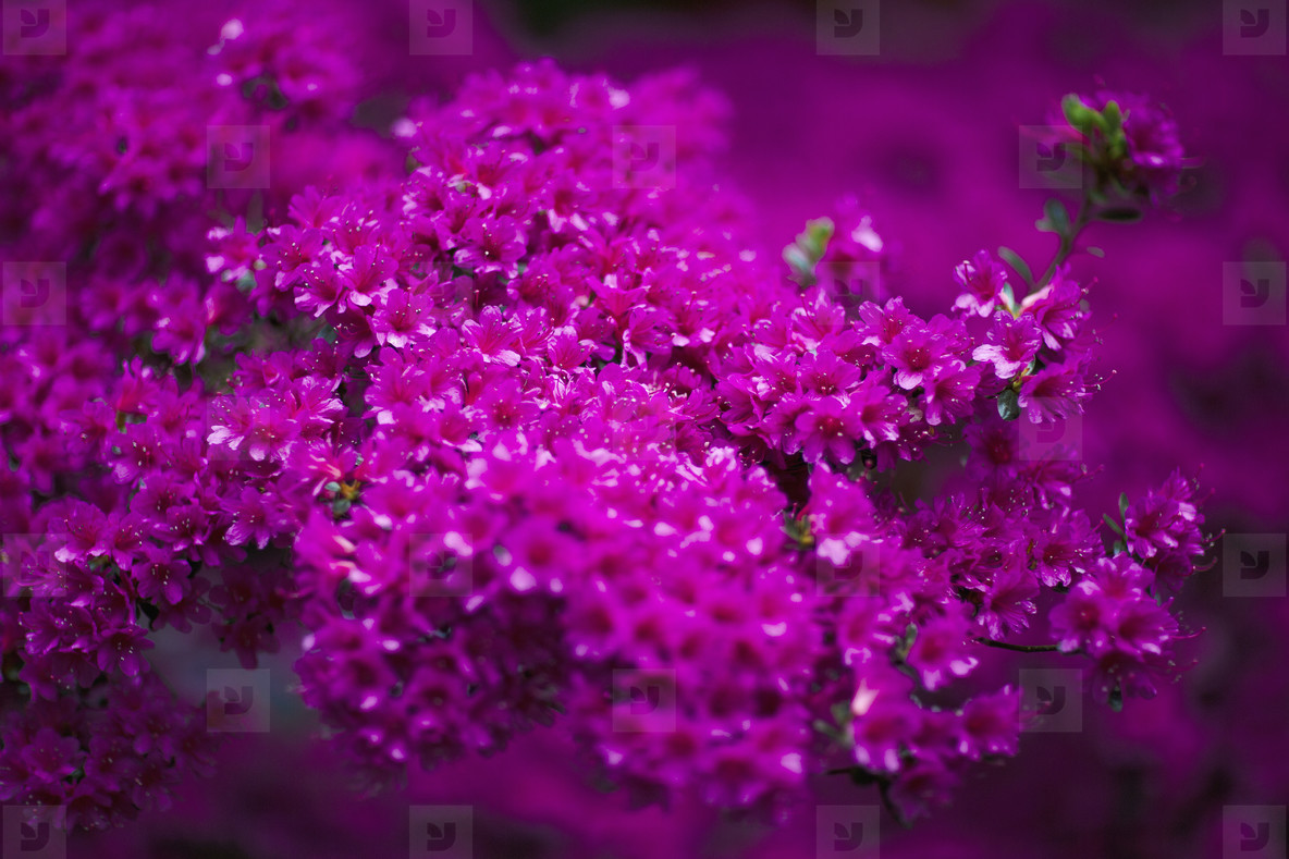 Dreamy Garden  02
