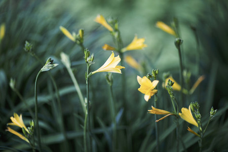 Dreamy Garden  03