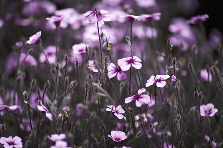 Dreamy Garden 05