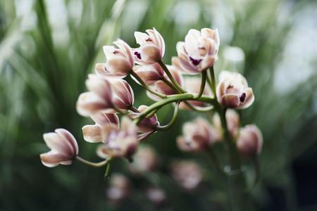 Dreamy Garden 09
