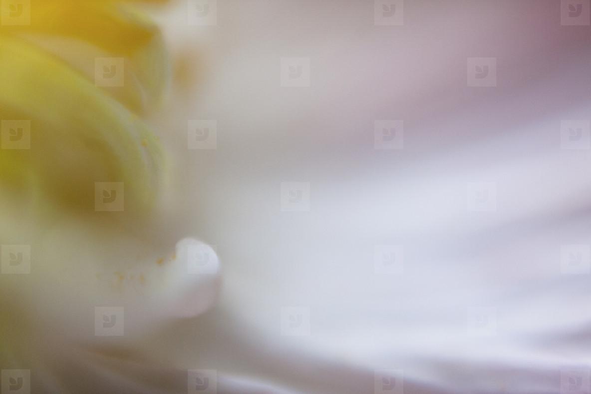 Floral Fantasy  17