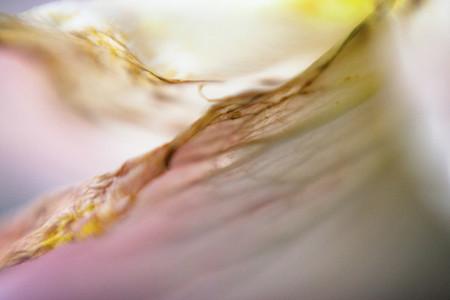 Floral Fantasy 18