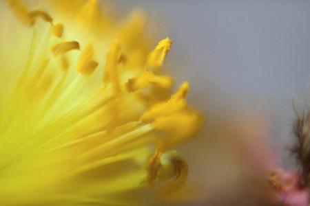 Floral Fantasy 22