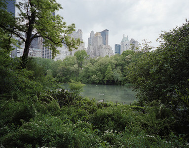 Nature City 10