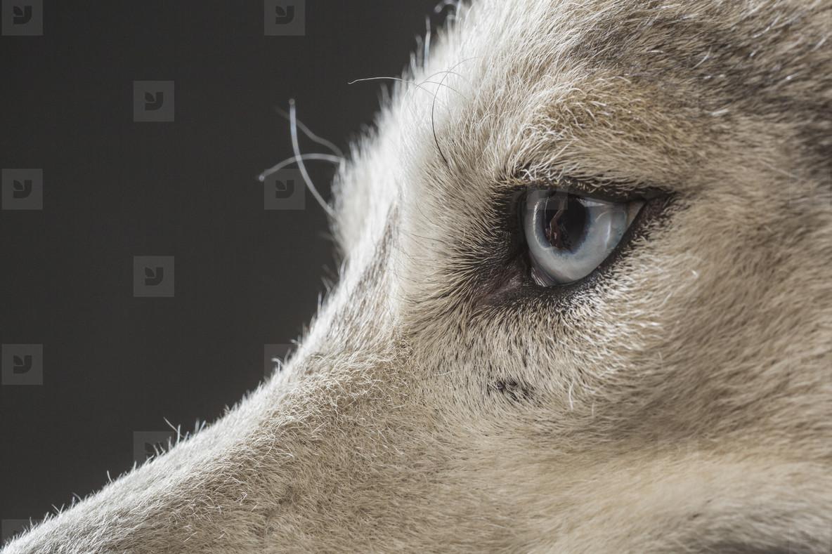 Dog Daze  07