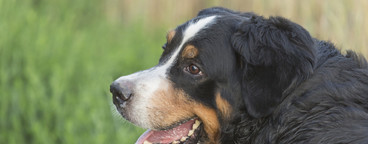Dog Daze  14