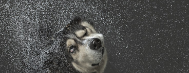 Dog Daze  19