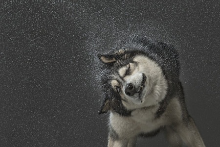 Dog Daze 37