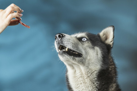 Dog Daze 51
